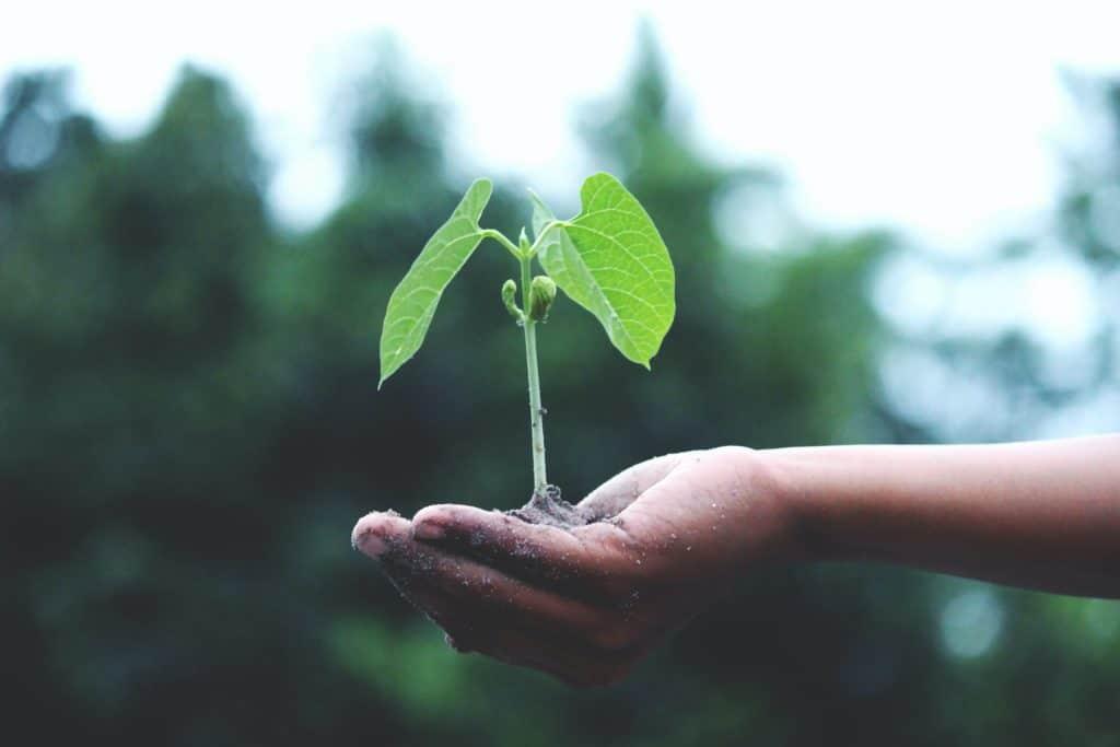 bomen planten voor je gasten
